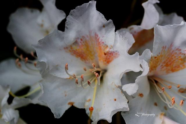 Orchide im Dunkeln