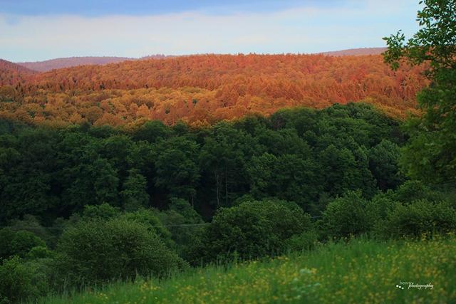 Farben der Natur