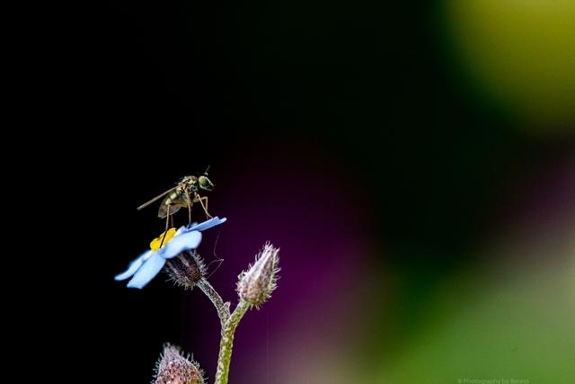 Macro-Fly