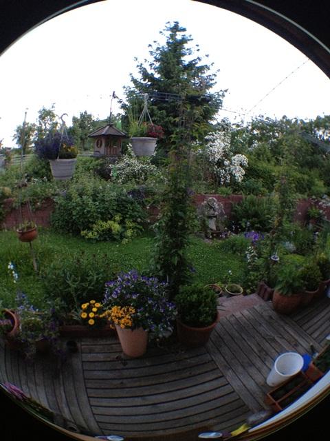 Fisheye Garten